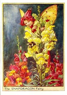 Snapdragon Flower Fairy Vintage Print by Cicely Mary Barker printed c.1950 – The Snapdragon Flower Fairy is one of Cicely Barkers Garden Flower Fairies.