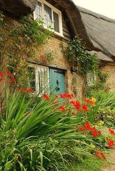 cottage garden - hidcote Vibrant Crocosmia Lucifer.
