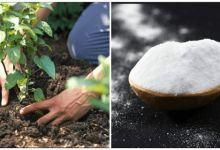 Vyzkoušejte pět tisíc let starou techniku očisty vašich střev - FarmaZdravi.cz Baking Soda Benefits, Baking Soda Uses, Comment Planter, Sodium Bicarbonate, Plantation, Permaculture, Fungi, Vegetable Garden, Health Benefits
