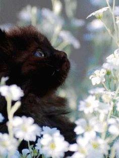 Ириска и цветы