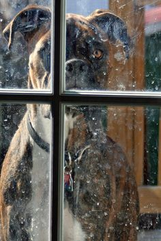 Nose art by Boxer in the window! #dogs #pets #Boxers Facebook.com/sodoggonefunny