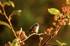 How to attract- and keep- birds in your yard.