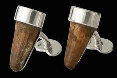 Mancuernillas auténtico fósil diente de dinosaurio