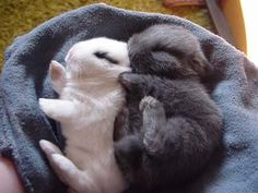 Two bunnies sleeping together. Cuteness overload! :D