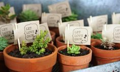 I made my own Succulent Bonbonnaries for our wedding 3 weeks ago - EOI for sale Geelong, VIC, Australia