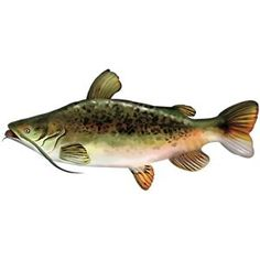 Bass Pro Shops Giant Stuffed Fish for Kids - Catfish