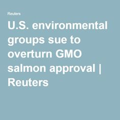U.S. environmental groups sue to overturn GMO salmon approval   Reuters