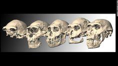 Dmanisi humanoid skull - Google Search