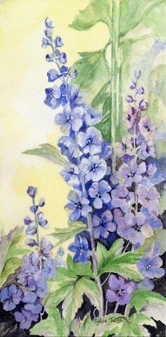 Delphiniums. A watercolour by Sylvia Twiss