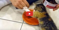 This kitten is not letting anyone get close to her food, not even her beloved human who gave it to her!