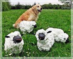 Heute habe ich von morgens bis abends Schafe gekuschelt. Und zwar so erfolgreich, dass ein Schaf direkt mit mir nach Hause gefahren ist.  ...