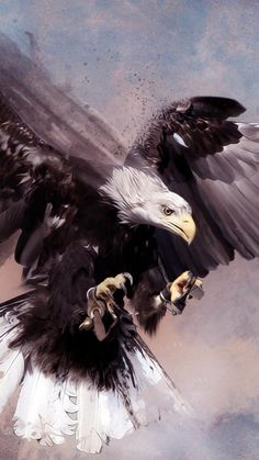 Best Cute Animals Photos You Never Seen Before – Page 2 – icanpinview Eagle Images, Eagle Pictures, Nicolas Vanier, Eagle Wallpaper, Camo Wallpaper, Meaningful Tattoos For Family, Eagle Art, Black Eagle, Latest Tattoos