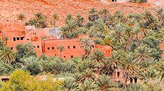 Oasis in Morocco, Skoura