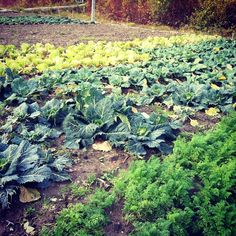 Veggies urban farming