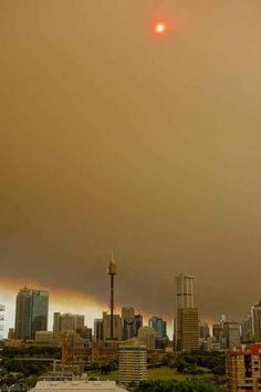 The sun was barely visible through the haze. | 50 Surreal Images From Sydney's Bushfire Crisis