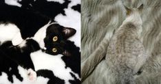 15 #Cats That Are Better at #Camouflage Than Most Hunters http://ibeebz.com