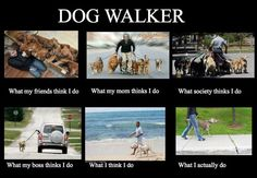 What Dog Walkers Do...