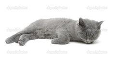 白い背景の上に寝ている灰色の子猫 — ストック画像 #53666577