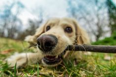 Is Your Puppy Chewing? Here's How To Stop Dog Chewing