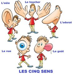 French vocabulary - Les 5 sens / The five senses French Language Lessons, French Lessons, French Teacher, Teaching French, Senses Activities, Kindergarten, French Worksheets, Material Didático, French Education