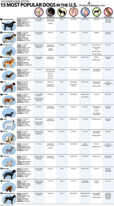 Report cards for the 15 most popular dog breeds in the U.S.