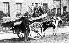 London, Flower Cart, Greenwich 1885, from Francis Frith