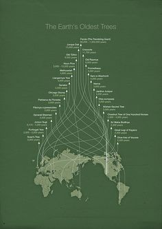 Trembling Giants infographic by Michæl Paukner  I like how the timeline arrows make the shape of a leaf. The higher up you go, the older the tree, but you have to double-check each side to see which tree is technically next.