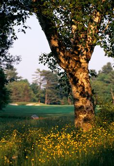 A view over The Briars golf course