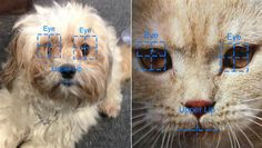 Lost and found: App uses facial recognition technology to find missing pets