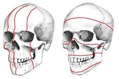 인체해부-두개골 바로(?)알기 :: 평범한남자의그림이야기