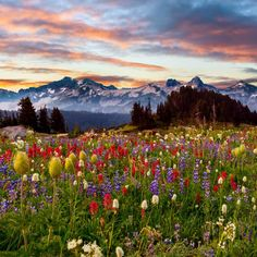 Flowers: Pretty Freshness Mountain Lovely Summer Nature Beautiful Sunset Colorful Spring Wildflowers Sky Landscape Meadow Hills Flowers Desktop Backgrounds for HD High Definition Wide Widescreen WUXGA WXGA WGA Standard Landscape Photography, Nature Photography, Colorful Mountains, Spring Wildflowers, Mount Rainier National Park, Mountain Wallpaper, Summer Paradise, Summer Pictures, Scenery Pictures