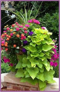 Container Gardening - An Answer To Minimal House For Increasing Vegetation Beautiful Container Garden With Spikes, Pink Geranium, Lantana, Violet And Magenta Petunias, And Cascading Sweet Potato Vine. I Love This Combination Container Herb Garden, Container Gardening Vegetables, Container Flowers, Vegetable Gardening, Full Sun Container Plants, Succulent Containers, Succulent Pots, Diy Garden, Garden Planters