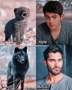 derek hale evolution do you like young derek yes ofc. Teen Wolf Derek Hale, Teen Wolf Scott, Teen Wolf Mtv, Teen Wolf Boys, Teen Wolf Dylan, Teen Wolf Memes, Teen Wolf Quotes, Teen Wolf Funny, Teen Wolf Poster