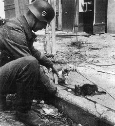 A Waffen-SS trooper pets two young kittens.