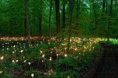 green design, eco design, sustainable design, LED light, Bruce Munro, Light installations, Philadelphia, Longwood Gardens