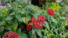 Red tiny flowers. Minúsculas flores rojas.