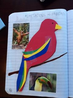 Interactive science notebook   animal adaptations