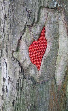 Scarlet Oak Rowan Berries by JRT Pickle