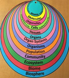 Earth Science Activities, Science Resources, Science For Kids, Science Projects, Biology Classroom, Teaching Biology, Science Biology, Life Science, Secondary School Science