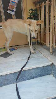 Βρέθηκε στην περιοχή της Νίκαιας θυληκό σκυλάκι νεαρής ηλικίας. Το ψάχνει κάποιος? Ζητείται άμεση φιλοξενία