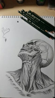 Head,Muscles  Shadows by Vila78
