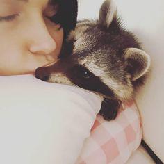 Cody the Raccoon