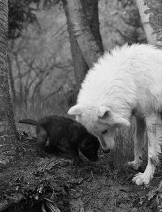i love this picture. wolves are such misunderstood creatures and i want one.