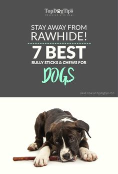 Top 7 Best Dog Bully Sticks & Chews in 2017 (Better than Rawhide). Most veterinarians, canine nutritionists and other dog health experts do not recommend allowing your pup to gnaw on rawhide for a variety of safety reasons (discussed in the dog rawhide article). Instead, they suggest feeding the best dog bully sticks and chews made of easy-to-digest ingredients. #best #dog #bully #sticks #treats #top #reviews #dogs #rawhide