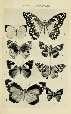 butterflies#Repin By:Pinterest++ for iPad#
