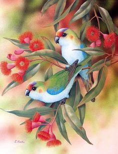 'Australian Purple-Crowned Lorikeets And Eucalyptus Blossom' by Lyn Cooke www. Cute Birds, Pretty Birds, Beautiful Birds, Exotic Birds, Colorful Birds, Australian Birds, Bird Artwork, Bird Illustration, Bird Drawings
