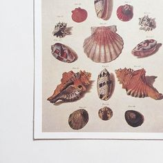 Seashell #snailmail #ephemera | @ofnotestationers
