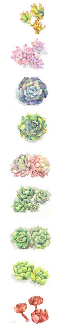 Watercolour succulents