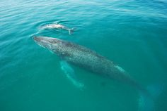 Whale Watching out of Brisbane, Queensland, Australia