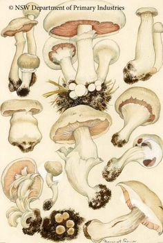 virus-diseases-mushrooms